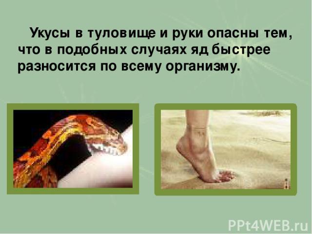 Укусы в туловище и руки опасны тем, что в подобных случаях яд быстрее разносится по всему организму.