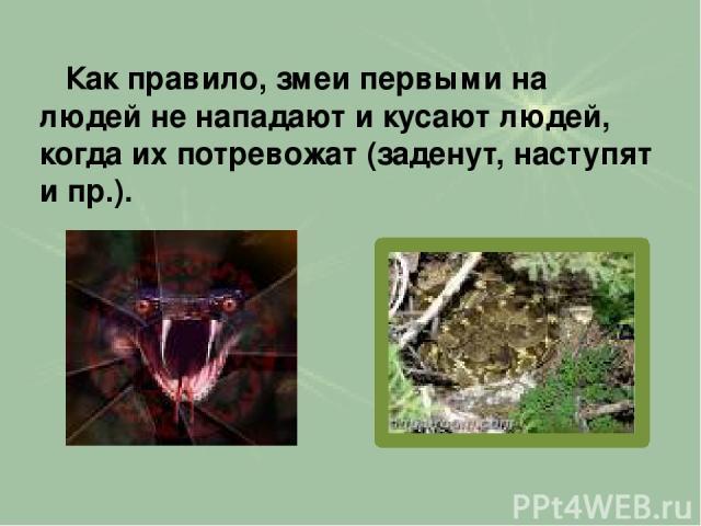 Как правило, змеи первыми на людей не нападают и кусают людей, когда их потревожат (заденут, наступят и пр.).