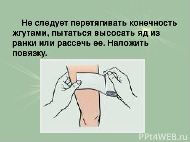 Не следует перетягивать конечность жгутами, пытаться высосать яд из ранки или рассечь ее. Наложить повязку.
