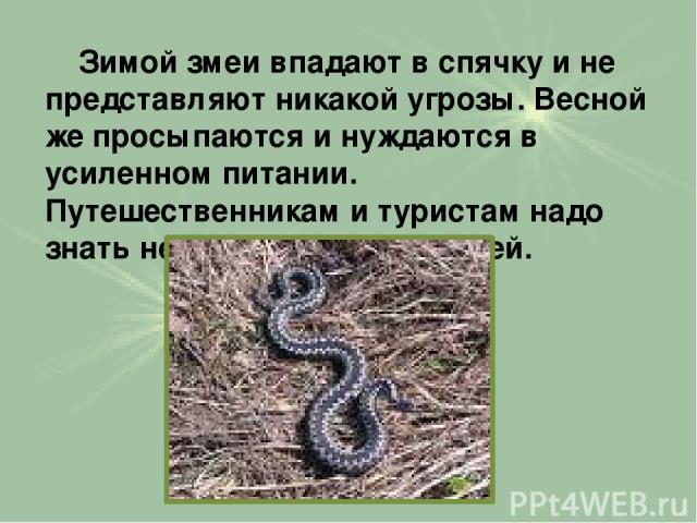 Зимой змеи впадают в спячку и не представляют никакой угрозы. Весной же просыпаются и нуждаются в усиленном питании. Путешественникам и туристам надо знать некоторые повадки змей.