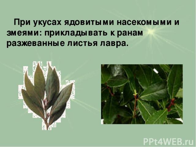 При укусах ядовитыми насекомыми и змеями: прикладывать к ранам разжеванные листья лавра.
