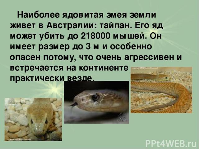 Наиболее ядовитая змея земли живет в Австралии: тайпан. Его яд может убить до 218000 мышей. Он имеет размер до 3 м и особенно опасен потому, что очень агрессивен и встречается на континенте практически везде.