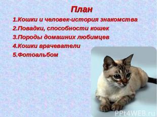 План Кошки и человек-история знакомства Повадки, способности кошек Породы домашн