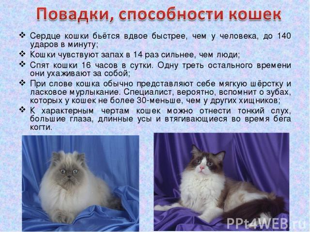 Сердце кошки бьётся вдвое быстрее, чем у человека, до 140 ударов в минуту; Кошки чувствуют запах в 14 раз сильнее, чем люди; Спят кошки 16 часов в сутки. Одну треть остального времени они ухаживают за собой; При слове кошка обычно представляют себе …