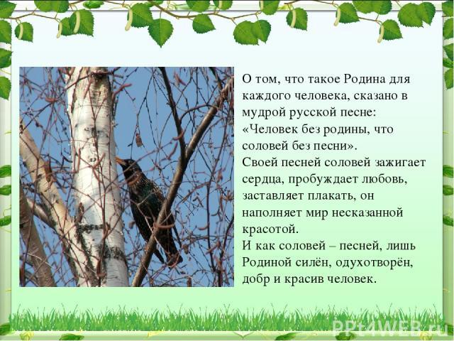 О том, что такое Родина для каждого человека, сказано в мудрой русской песне: «Человек без родины, что соловей без песни». Своей песней соловей зажигает сердца, пробуждает любовь, заставляет плакать, он наполняет мир несказанной красотой. И как соло…
