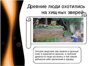Древние люди охотились на хищных зверей Сегодня амурский тигр занесён в красную