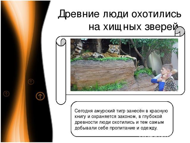 Древние люди охотились на хищных зверей Сегодня амурский тигр занесён в красную книгу и охраняется законом, в глубокой древности люди охотились и тем самым добывали себе пропитание и одежду.