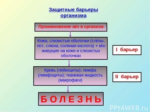 Проникновение м/о в организм Кожа, слизистые оболочки (слёзы, пот, слюна, соляная кислота) + м\о живущие на коже и слизистых оболочках Кровь (лейкоциты); лимфа (лимфоциты); тканевая жидкость (макрофаги) Б О Л Е З Н Ь I барьер II барьер Защитные барь…