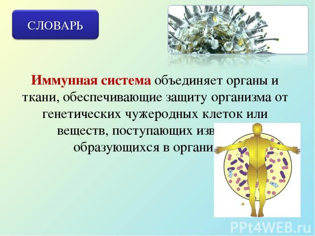 Иммунная система объединяет органы и ткани, обеспечивающие защиту организма от генетических чужеродных клеток или веществ, поступающих извне или образующихся в организме.