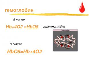гемоглобин В тканях Hb+4O2 =HbO8 В легких оксигемоглобин HbO8=Hb+4O2