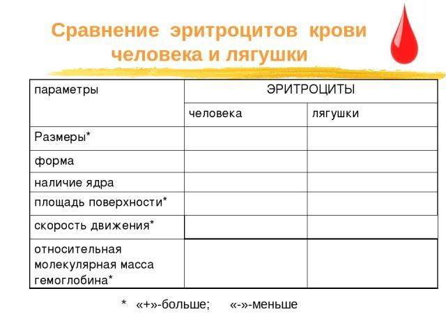 Сравнение эритроцитов крови человека и лягушки * «+»-больше; «-»-меньше