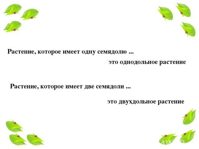 Растение, которое имеет одну семядолю ... это однодольное растение Растение, которое имеет две семядоли ... это двухдольное растение