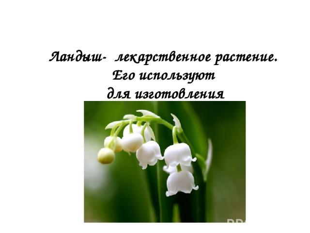 Ландыш- лекарственное растение. Его используют для изготовления сердечных лекарств.
