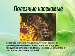 Основное значение пчел в том, что они являются производителями меда, воска, проп