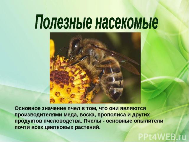 Основное значение пчел в том, что они являются производителями меда, воска, прополиса и других продуктов пчеловодства. Пчелы - основные опылители почти всех цветковых растений.