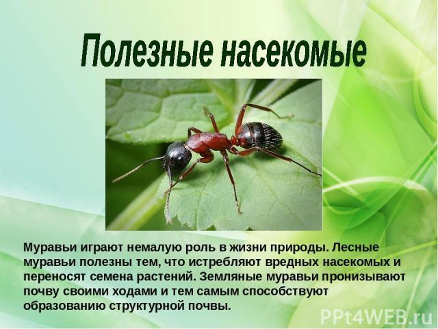 Муравьи играют немалую роль в жизни природы. Лесные муравьи полезны тем, что истребляют вредных насекомых и переносят семена растений. Земляные муравьи пронизывают почву своими ходами и тем самым способствуют образованию структурной почвы.