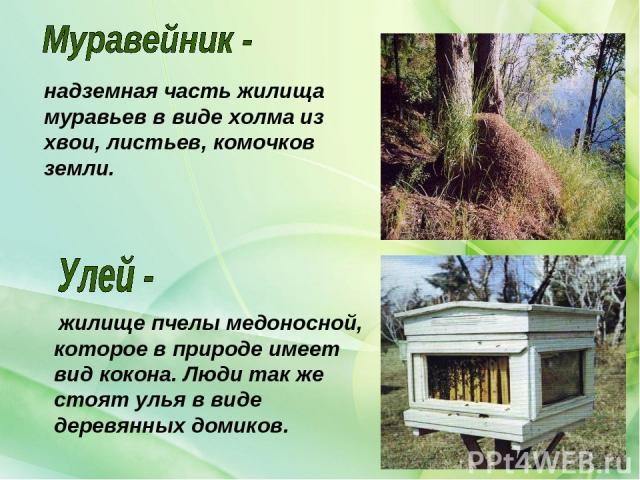 жилище пчелы медоносной, которое в природе имеет вид кокона. Люди так же стоят улья в виде деревянных домиков. надземная часть жилища муравьев в виде холма из хвои, листьев, комочков земли.