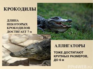Самая крупная ящерица Очковая змея Большая ядовитая змея Удав Морская черепаха Г