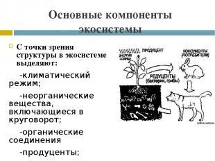 Основные компоненты экосистемы С точки зрения структуры в экосистеме выделяют: -