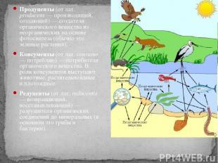 Продуценты (от лат. producens — производящий, создающий) — создатели органическо
