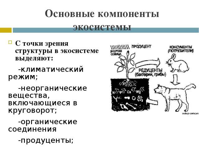 Основные компоненты экосистемы С точки зрения структуры в экосистеме выделяют: -климатический режим; -неорганические вещества, включающиеся в круговорот; -органические соединения -продуценты; -макроконсументы, или фаготрофы; -микроконсументы сапротроф..