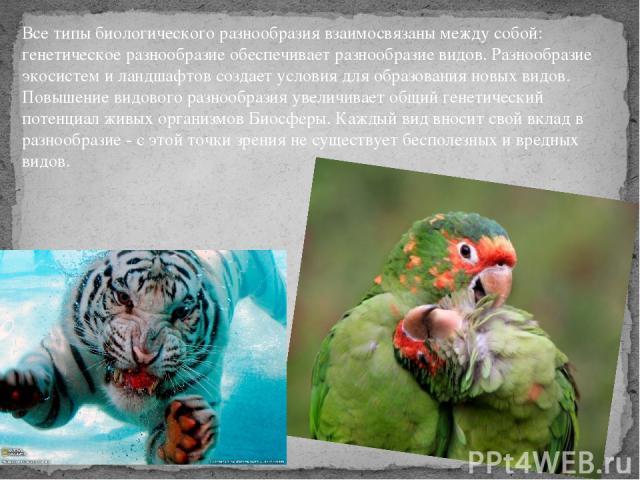 Все типы биологического разнообразиявзаимосвязаны между собой: генетическое разнообразие обеспечивает разнообразие видов. Разнообразие экосистем и ландшафтов создает условия для образования новых видов. Повышение видового разнообразия увеличивает о…