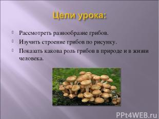 Рассмотреть разнообразие грибов. Изучить строение грибов по рисунку. Показать ка