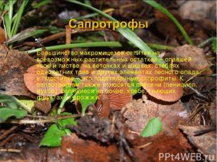 Большинство макромицетов селится на всевозможных растительных остатках – опавшей