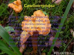 Широко распространены в природе грибы - симбиотрофы, которые получают необходимы