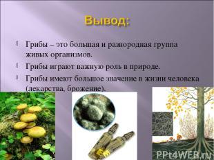 Грибы – это большая и разнородная группа живых организмов. Грибы играют важную р