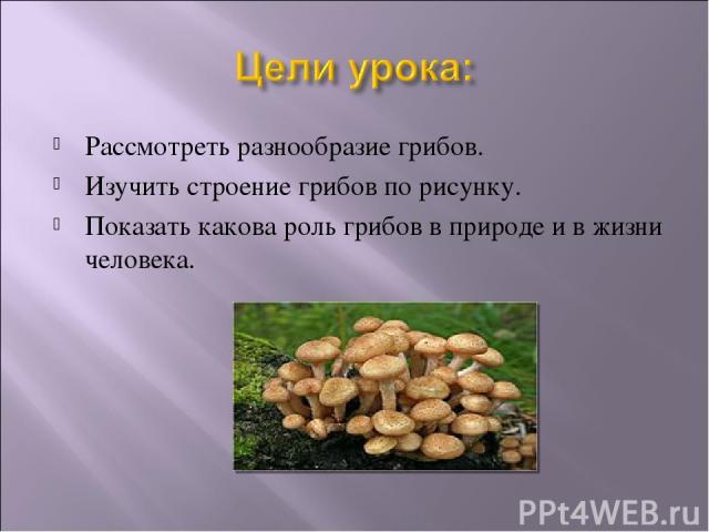 Рассмотреть разнообразие грибов. Изучить строение грибов по рисунку. Показать какова роль грибов в природе и в жизни человека.