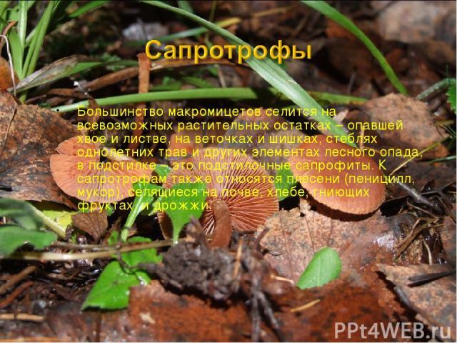 Большинство макромицетов селится на всевозможных растительных остатках – опавшей хвое и листве, на веточках и шишках, стеблях однолетних трав и других элементах лесного опада, в подстилке – это подстилочные сапрофиты. К сапротрофам также относятся п…
