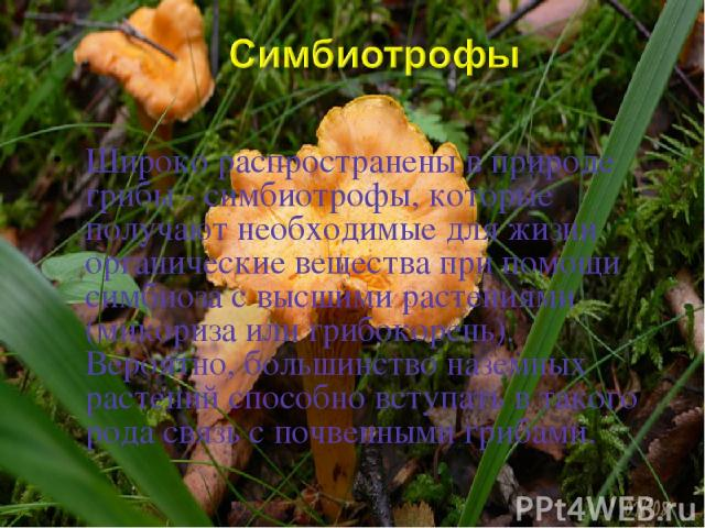 Широко распространены в природе грибы - симбиотрофы, которые получают необходимые для жизни органические вещества при помощи симбиоза с высшими растениями (микориза или грибокорень). Вероятно, большинство наземных растений способно вступать в такого…