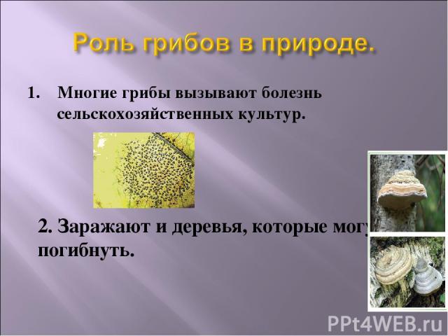 1. Многие грибы вызывают болезнь сельскохозяйственных культур. 2. Заражают и деревья, которые могут погибнуть.