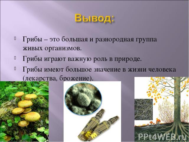 Грибы – это большая и разнородная группа живых организмов. Грибы играют важную роль в природе. Грибы имеют большое значение в жизни человека (лекарства, брожение).