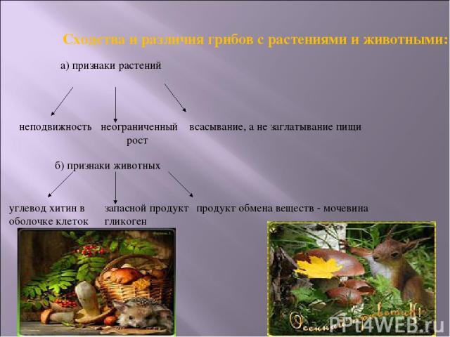 Сходства и различия грибов с растениями и животными: а) признаки растений неподвижность неограниченный рост всасывание, а не заглатывание пищи б) признаки животных углевод хитин в оболочке клеток запасной продукт гликоген продукт обмена веществ - мочевина