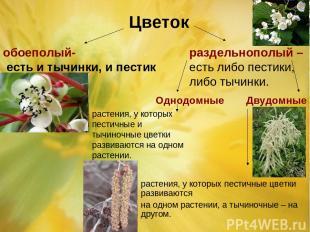 Цветок обоеполый- есть и тычинки, и пестик раздельнополый – есть либо пестики, л