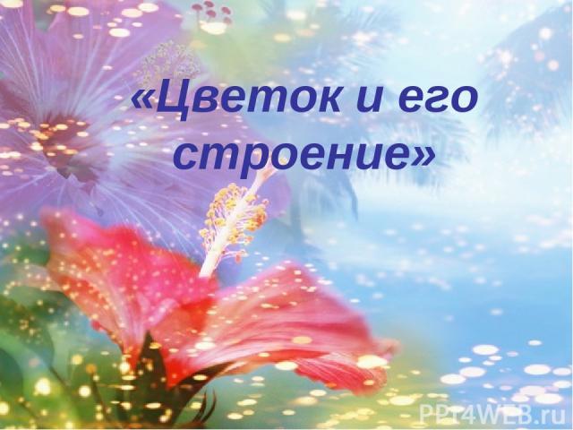 «Цветок и его строение»