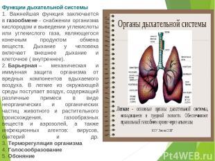 Функции дыхательной системы 1. Важнейшая функция заключается вгазообмене- снаб