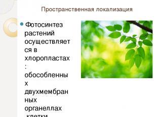 Пространственная локализация Фотосинтез растений осуществляется вхлоропластах: