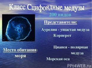Аурелия - ушастая медуза Корнерот Цианея - полярная медуза Морская оса 200 видов