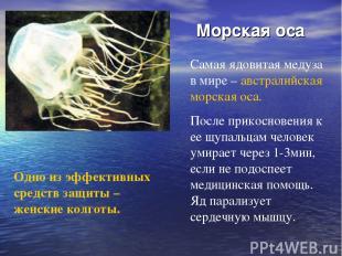 Морская оса Самая ядовитая медуза в мире – австралийская морская оса. После при