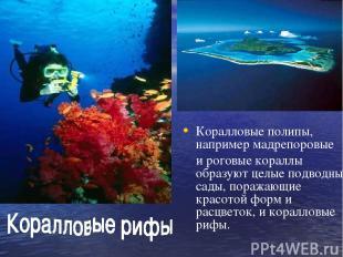 Коралловые полипы, например мадрепоровые и роговые кораллы образуют целые подвод
