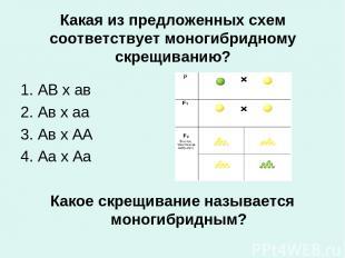 Какая из предложенных схем соответствует моногибридному скрещиванию? 1. АВ х ав