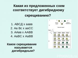Какая из предложенных схем соответствует дигибридному скрещиванию? 1. АВСД х аа