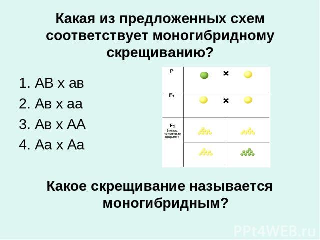 Какая из предложенных схем соответствует моногибридному скрещиванию? 1. АВ х ав 2. Ав х аа 3. Ав х АА 4. Аа х Аа Какое скрещивание называется моногибридным?