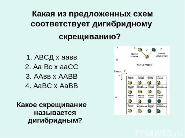 Какая из предложенных схем соответствует дигибридному скрещиванию? 1. АВСД х аавв 2. Аа Вс х ааСС 3. ААвв х ААВВ 4. АаВС х АаВВ Какое скрещивание называется дигибридным?