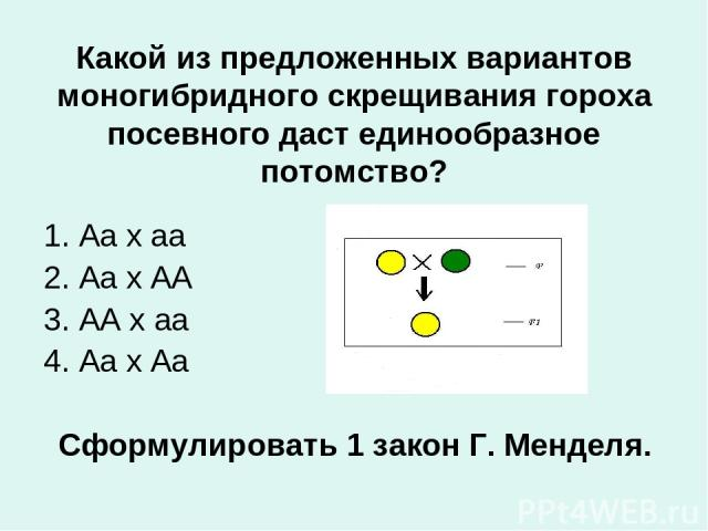 Какой из предложенных вариантов моногибридного скрещивания гороха посевного даст единообразное потомство? 1. Аа х аа 2. Аа х АА 3. АА х аа 4. Аа х Аа Сформулировать 1 закон Г. Менделя.
