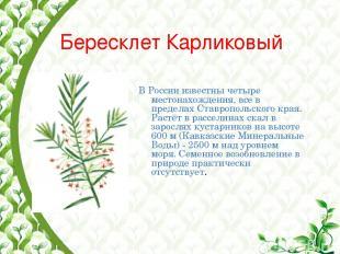 Бересклет Карликовый В России известны четыре местонахождения, все в пределах Ст