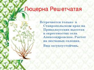 Люцерна Решетчатая Встречается только в Ставропольском крае на Прикалаусских выс